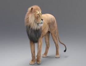 3D real lion white background images