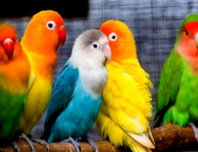 Colouring baby Parrot images