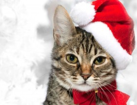 Lovey cat say Merry Christmas pics 2020