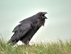 Scary Crow image